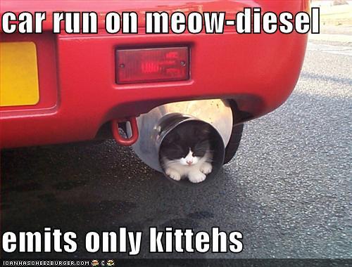 meow-diesel.jpg